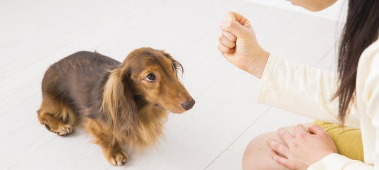犬は何歳から成犬なんですか?また、犬の1歳は人間換算すると... - Yahoo!知恵袋